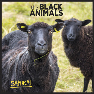 black-animals